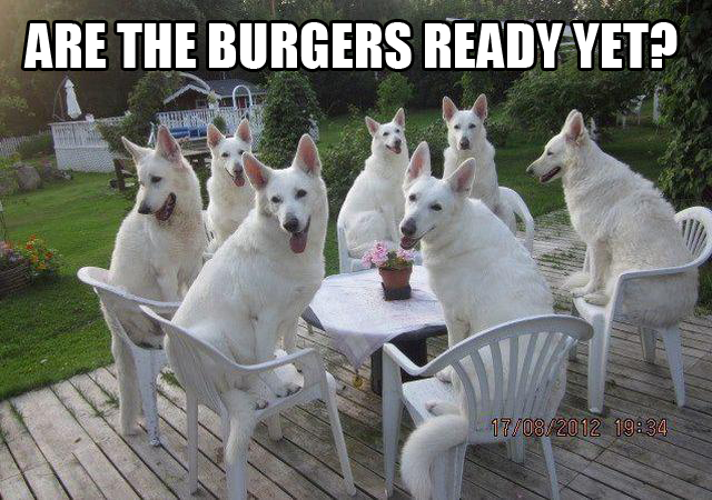 Are the burgers ready yet dog meme