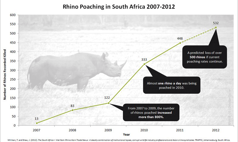Rhino Poaching in South Africa Graphic