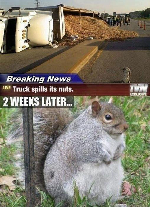 Truck Spills Its Nuts Fat Squirrel