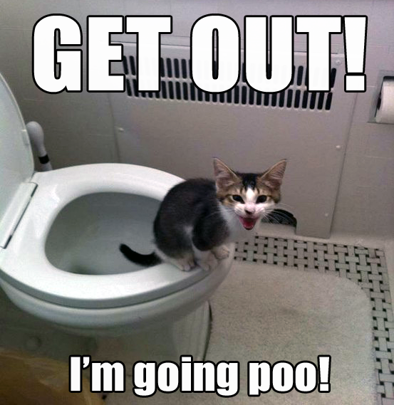 Get out I'm going poo cat meme